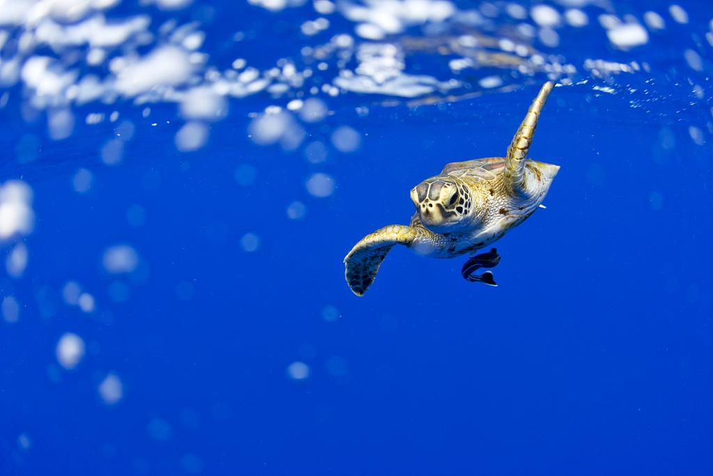 Study Shows Light Pollution Reaches The Sea Floor Harming Marine Life Cgtn