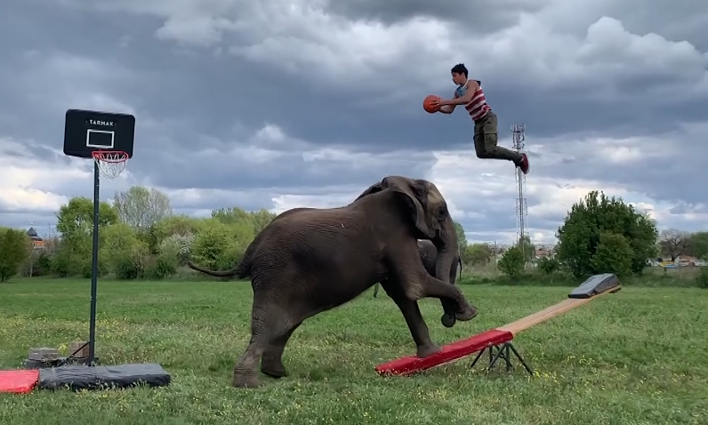 "Rene Casselly has become known as ""elephant boy"" with his TikTok stunts"