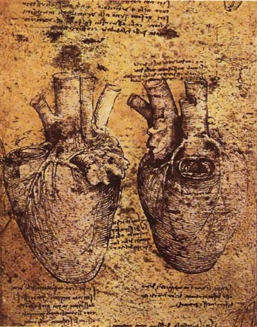 AI helps solve 500-year-old heart mystery first noticed by Da Vinci