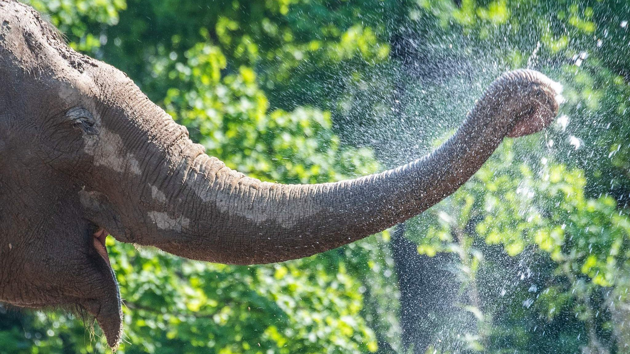 With one hit of its trunk, an elephant kills a Spanish zookeeper - CGTN