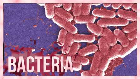 Antibiotic resistance: Bacteria fight back